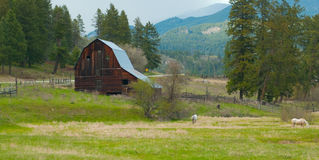 Farmyard. In the spring with horses in the foreground Stock Images