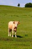 farmyard arkivbild