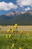 Farmyard and flowers by Mt Princeton CO Stock Images