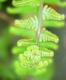 Farn叶子发光的绿色背景 免版税库存图片