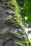 Farn auf Baum Lizenzfreies Stockbild