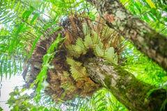 Farn auf Baum Stockfotografie