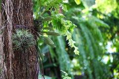 Farn auf Baumhintergrund Stockfoto