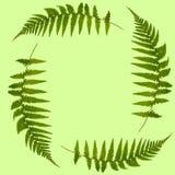 Farn-Blätter Stockbild