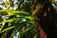 Farn, der auf anderem Baum wächst lizenzfreies stockfoto