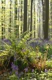 Farn im sonnigen Frühlingswald lizenzfreie stockfotografie