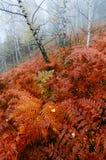 Farn im Wald Lizenzfreies Stockfoto