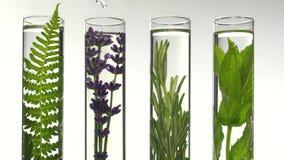 Farn, Lavendel und Minze in den Reagenzgläsern stock footage