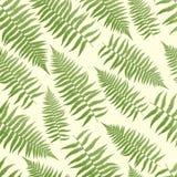 Farn-Muster-Hintergrund Stockbild