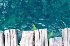 Farn verlässt auf dem Hintergrund des transparenten Kristallwassers Stockfoto