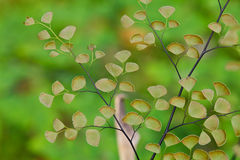 Farnanlagen umfassen den Boden des natürlichen Waldes Stockbild