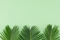 Farnblätter auf grünem Pastellhintergrund Lizenzfreie Stockfotografie