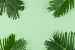Farnblätter auf grünem Pastellhintergrund Lizenzfreies Stockbild