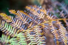 Farnblätter auf unscharfem natürlichem Hintergrund Stockfotografie