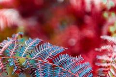 Farnblätter auf unscharfem natürlichem Hintergrund Lizenzfreie Stockfotografie