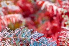 Farnblätter auf unscharfem natürlichem Hintergrund Lizenzfreie Stockbilder