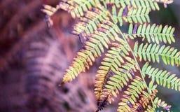 Farnblätter auf unscharfem natürlichem Hintergrund Lizenzfreie Stockfotos