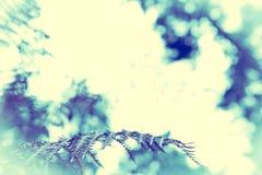 Farnblätter auf unscharfem natürlichem Hintergrund Stockfoto