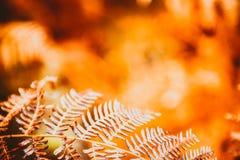 Farnblätter auf unscharfem natürlichem Hintergrund Stockbilder