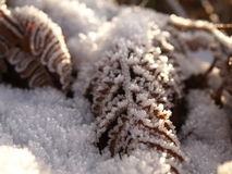 Farnblätter im Schnee Stockfotos
