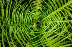 Farnblatt-Grünhintergrund Stockbilder