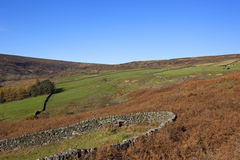 Farndale landscape Royalty Free Stock Photo