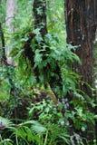 Farne auf einem Baumkabel Stockfotografie