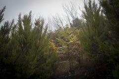 Farne im nebelhaften Wald Lizenzfreie Stockfotos