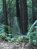 Farne im Wald lizenzfreies stockbild