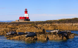Farne Islands Landscape Stock Images