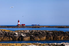 The Farne Islands Royalty Free Stock Photos