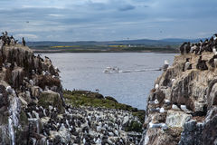 The Farne Islands Stock Photography