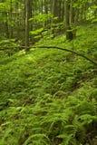 Farne u. Wald, rosafarbener Bett-Bereich, Pisgah N-Düngung Stockfotografie