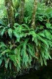 Farne und Bäume Lizenzfreie Stockbilder