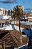Faro city rooftops. Aerial view of Faro city with palm tree in foreground, Portugal Royalty Free Stock Image