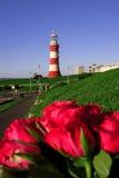 faro con le rose in Plymouth, Regno Unito fotografie stock