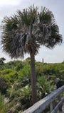 Faro de la entrada de Ponce Fotografía de archivo