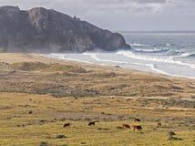 Faro del sur del punto Foto de archivo