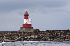 Faro e guarnizioni di Longstone Immagini Stock Libere da Diritti