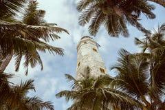 Faro e palme Fotografia Stock Libera da Diritti