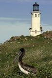 Faro e pellicano Fotografia Stock Libera da Diritti