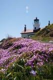Faro en la floración Fotografía de archivo