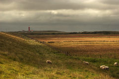 Faro nei Paesi Bassi Fotografie Stock Libere da Diritti