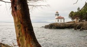 Faro San Juan Island Haro Strait del forno a calce dell'albero del Madrona Fotografia Stock