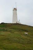 Faro y caballos islandeses, Reykjanes, Islandia Foto de archivo libre de regalías