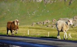 Faroe Island, ovejas en el camino Imágenes de archivo libres de regalías
