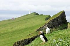 Faroe island puffins and light house