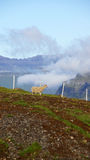 Faroe Islands, sheep in the clouds. Sheep in the clouds on Eysturoy Island on the road to Gjov in the Faroe royalty free stock photography