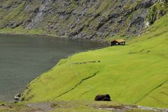 Faroe Islands sheep and hill Stock Image