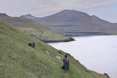 Faroese landschap met mooie bergen met Leuk weinig wit lam stock fotografie